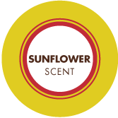 Sunflower Scent