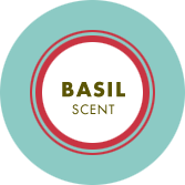 Basil Scent