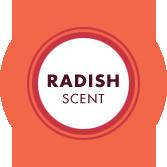 Radish Scent